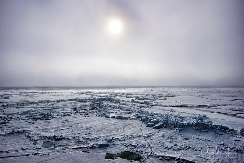 150630_Polar Bear at Ship_9472.jpg