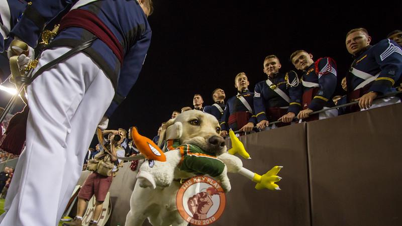 Growley II holds a chew toy of Miami's mascot, Sebastian the Duck, on the sidelines. (Mark Umansky/TheKeyPlay.com)