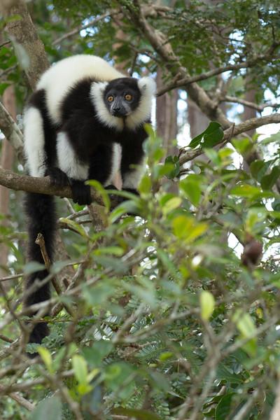 Madagascar_2013_IG3A2312.jpg