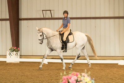 Horse 623