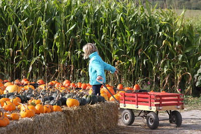 Pumpkin Hunting 2012
