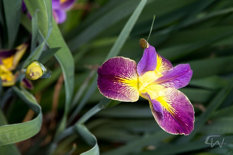 PlantDelightsSpring2013-2652.jpg