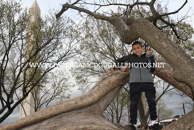 Jared Jr. Tree Climbing  &  kite Flying on the National Mall DC