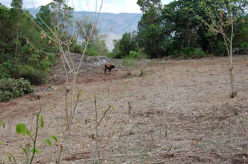 future goat pasture