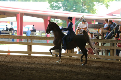 28) Adult Equitation