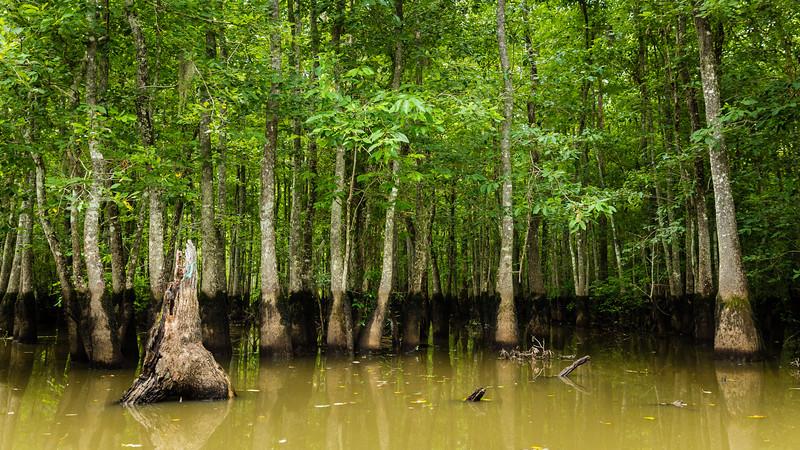 Swamp_.jpg