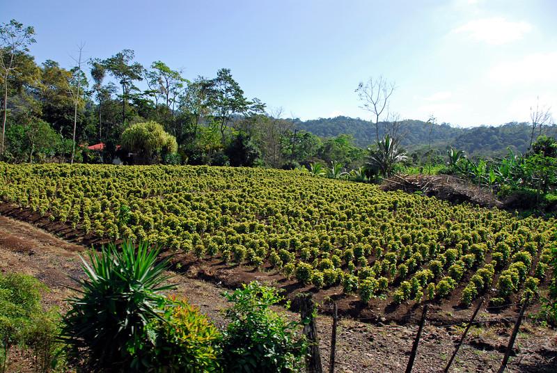 080126 0223 Costa Rica - La Fortuna to San Ramone Bus Trip _L ~E ~L.JPG