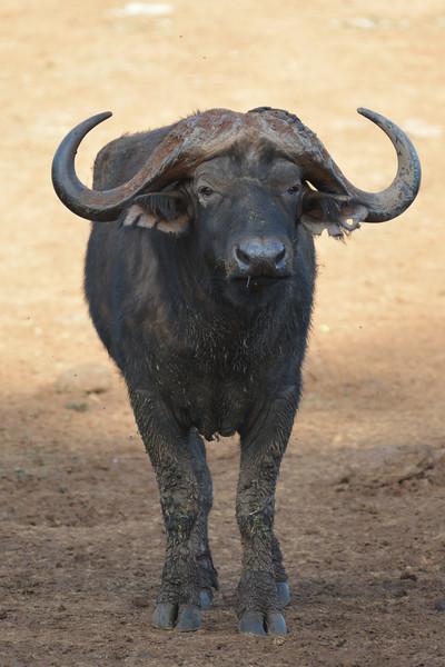 East Africa Safari 75.jpg