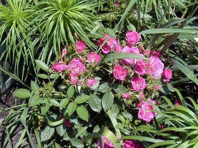 2005 Garden