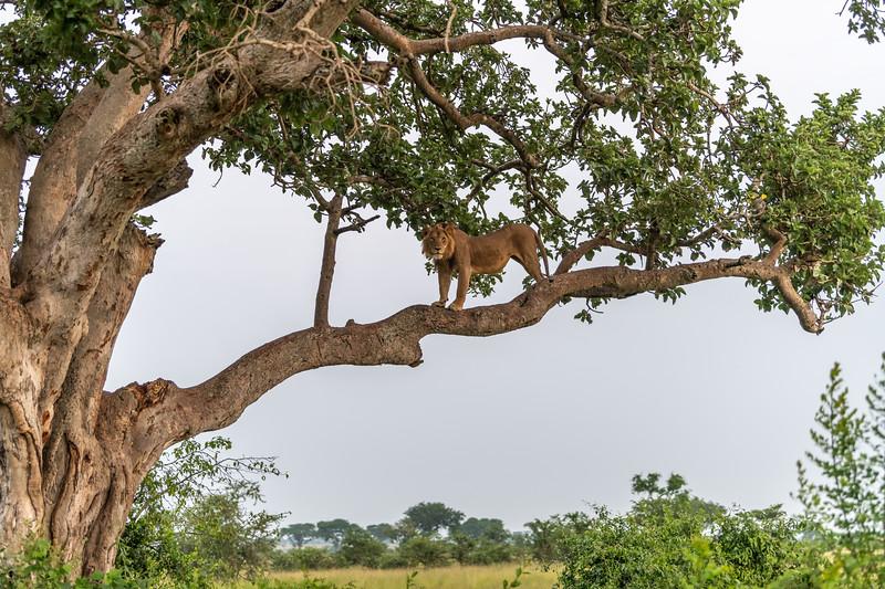 Uganda_T_QE-1768.jpg