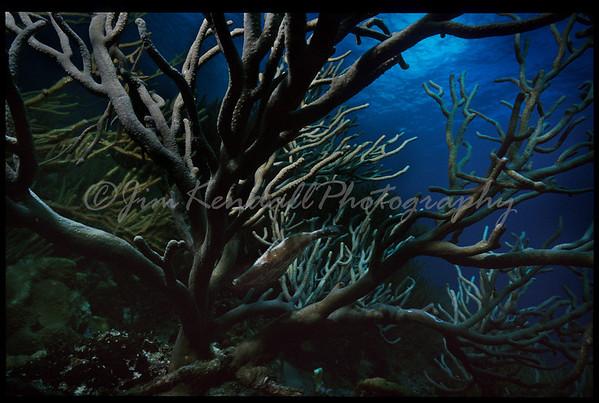 Underwaterscapes