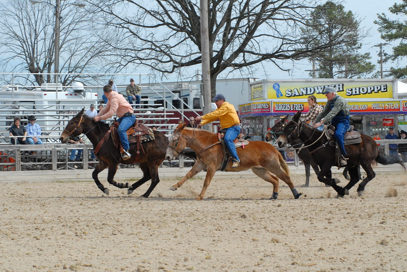 2013 Jackpot Mule Races