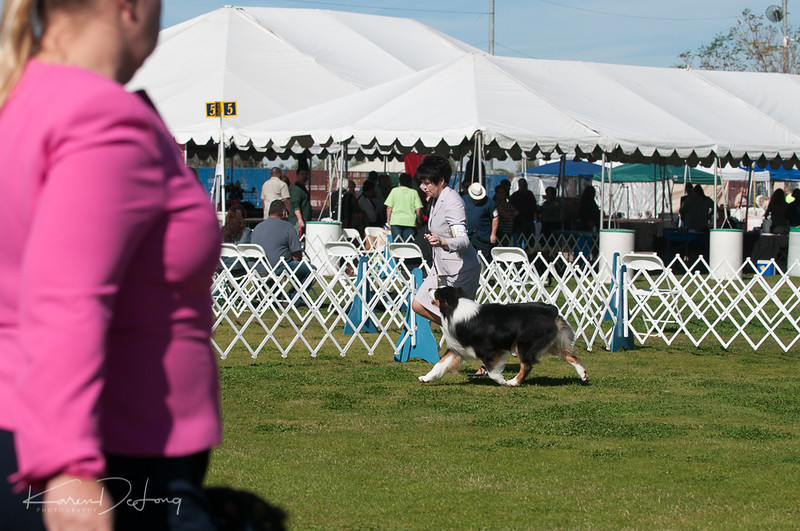 20170205_Australian Shepherds_Lost Dutchman Kennel Club-69.jpg