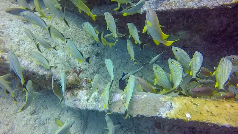 Ciesla-GOPR6688 - KC Fishes.jpg