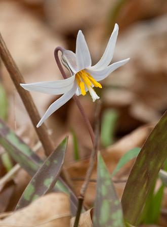 Backyard* Wildflowers*--2009