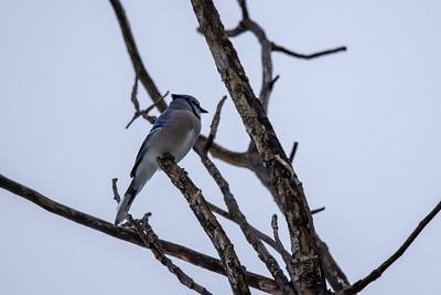 2021-02-27 Kensington Winter Birds