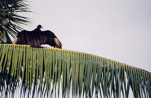 More Tropical Birds