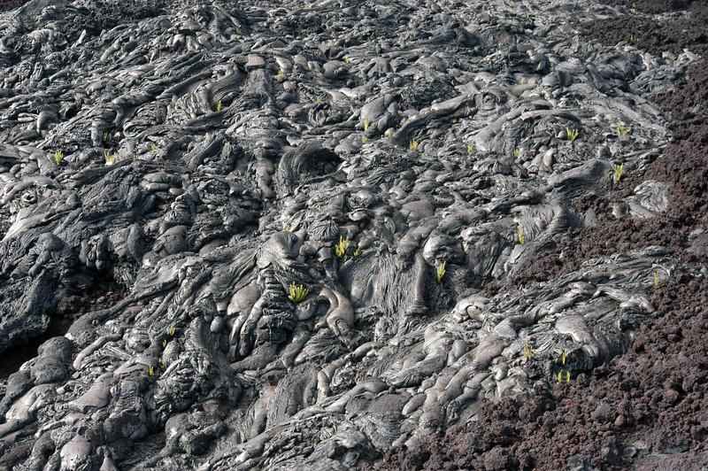 263- 20080412- Hawaii 15- Volcano Nat'l Park DSC_3132.jpg