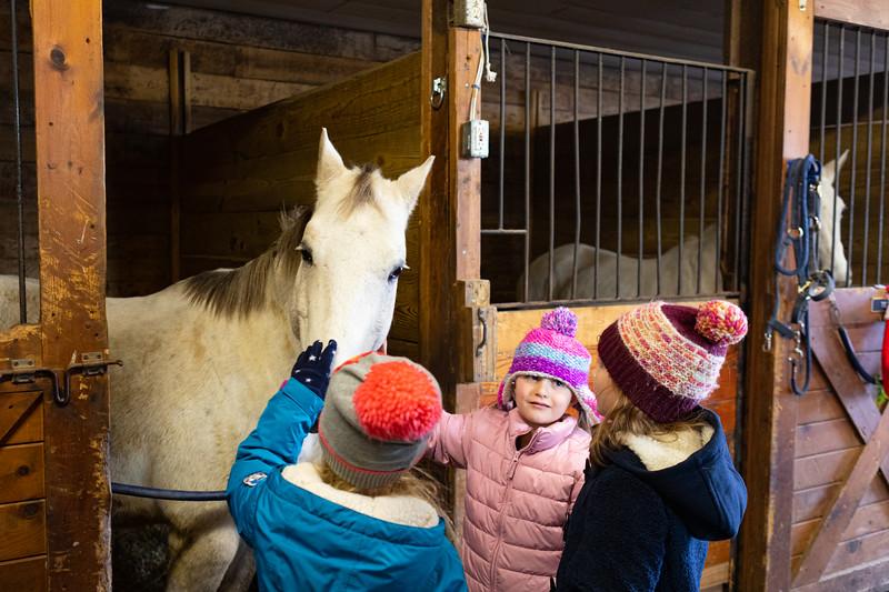 FPC_Horses and Holidays_2019_ ATC99470.jpg