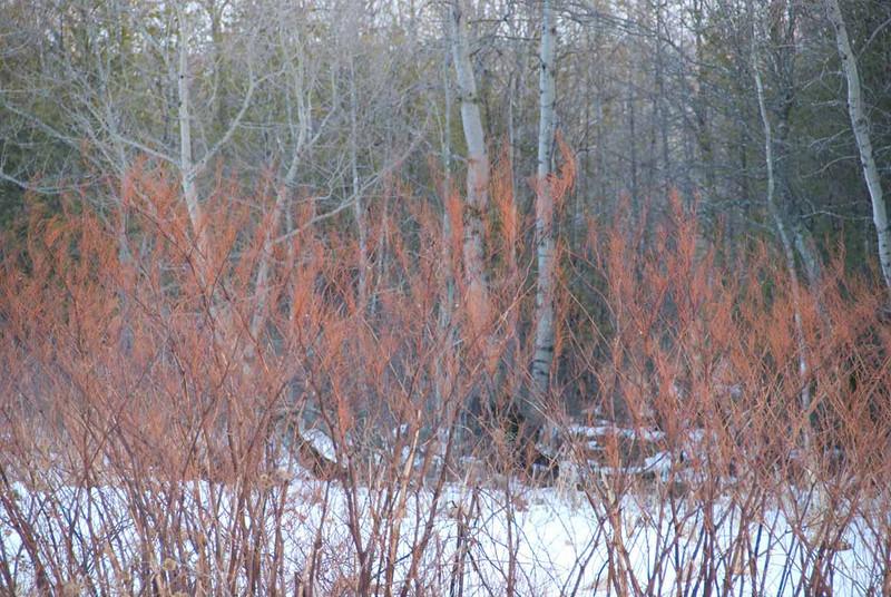 winter-shrubs.jpg