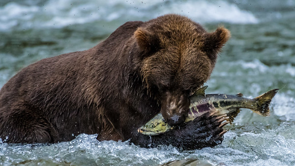 Great Bear Rainforest Trip Experiences