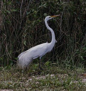 2017 Florida