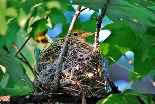 2012-05-29 Bird Nest