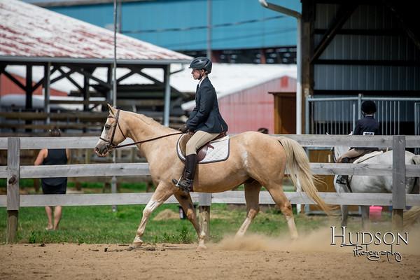 67 Hunter Under Saddle Ponies Large