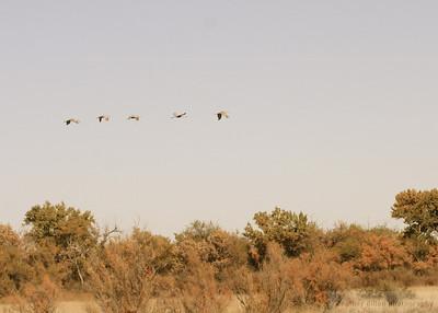2008-10 Bird Refuge