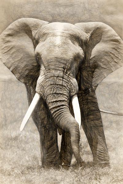 Elephant 0398 Art.jpg