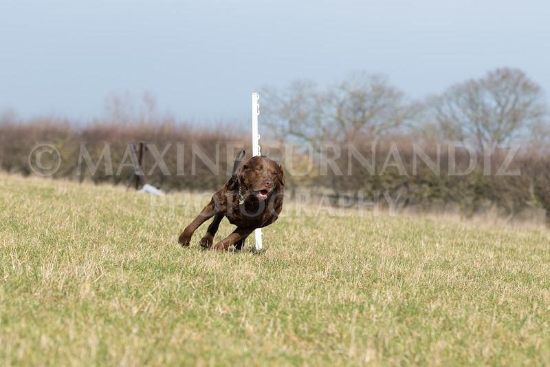 Dog Training Novice GD Feb2019-5793.jpg
