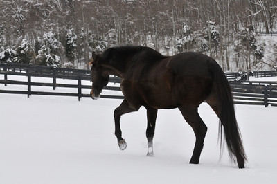 Horseplay in Snow