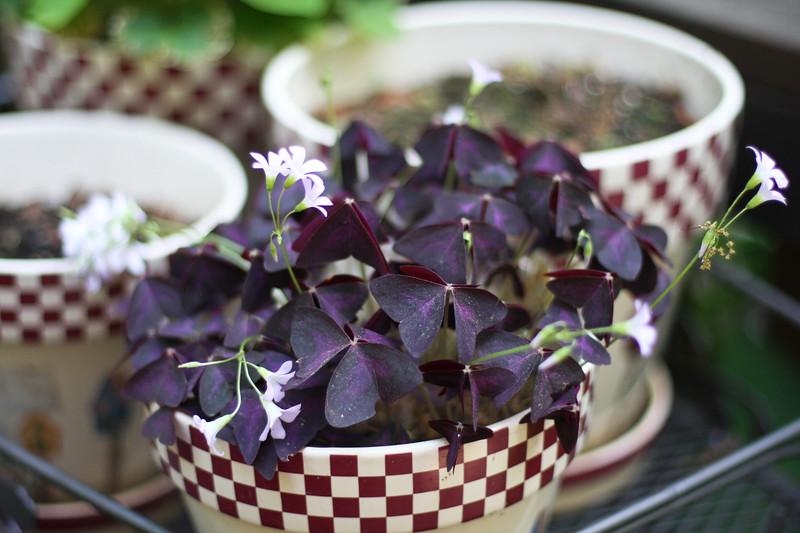 Moms_garden10.jpg