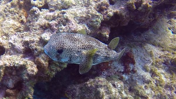 2018 Photos - Key Largo Diving