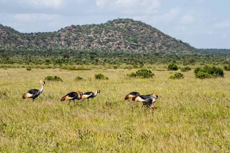 Samburu (50 of 70).jpg