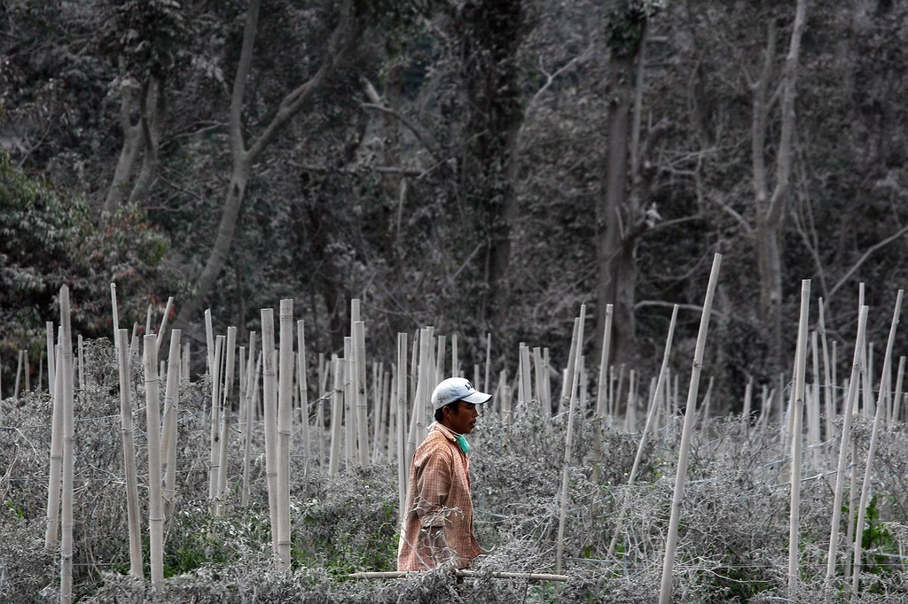. This picture taken on November 25 shows a villager walking past a field covered by ash following the Sinabung volcano eruption in Karo.   AFP PHOTO / IVAN DAMANIK/AFP/Getty Images