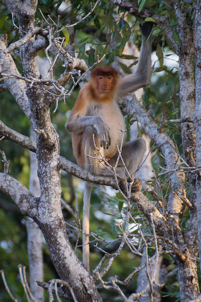 Borneo-2014-214.jpg