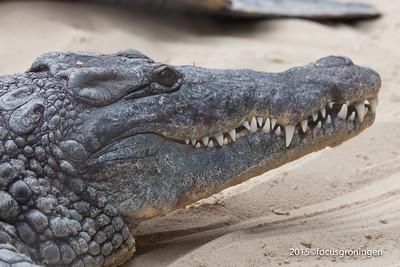 Dieren Krokodillen