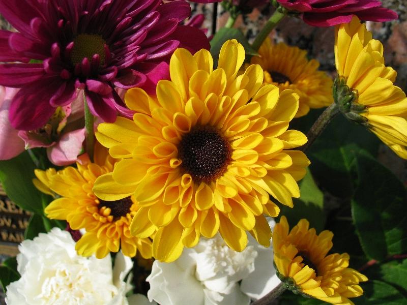 sundayflora1_30.jpg