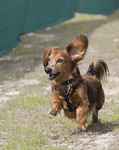 2009 Doglympics USA : Photos of the Avalon Park 2009 Doglympics.  Enjoy! 
