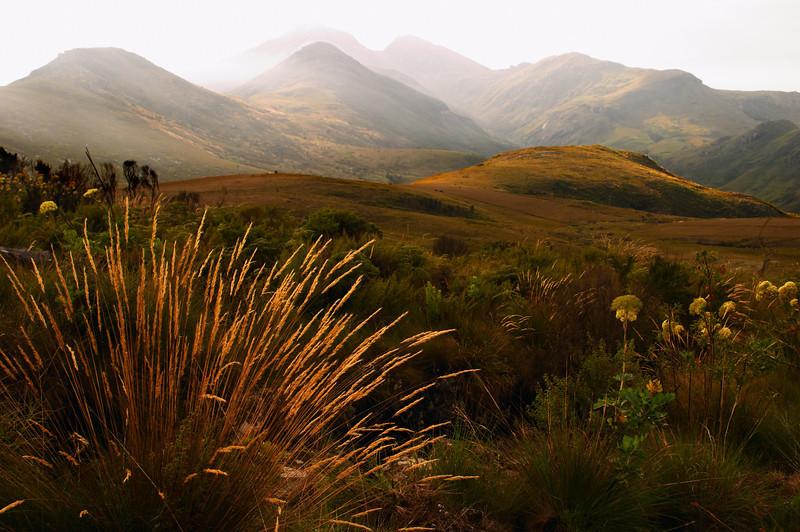 Mulanje - Mulanje Mountain - 3482.jpg