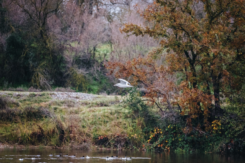 american-river-3.jpg