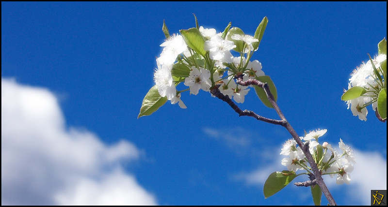 SpringDay3.jpg
