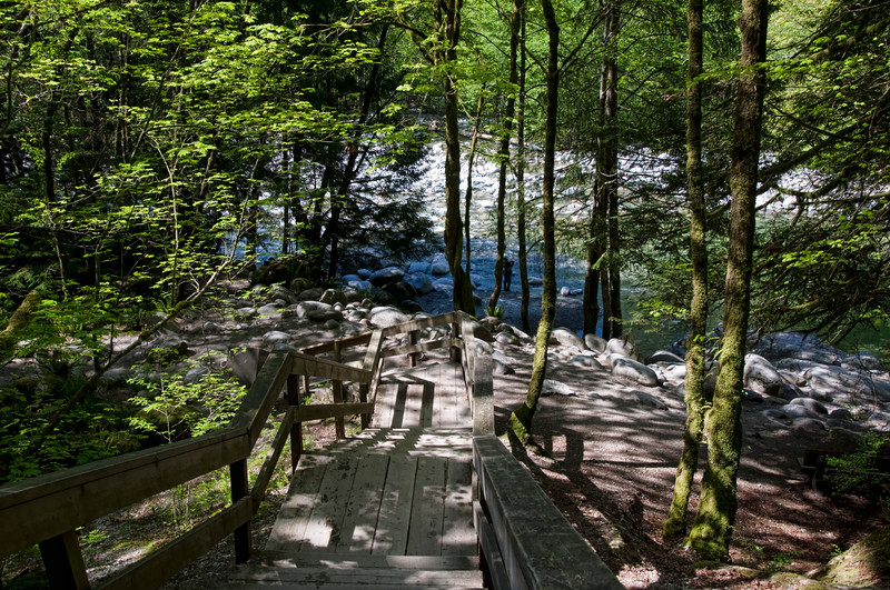 Lynn Canyon.  View from one of the many very long stairs!