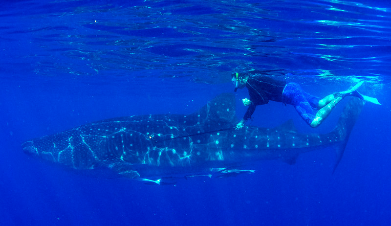 2014 Whale Shark - Cave Adventure-57.jpg