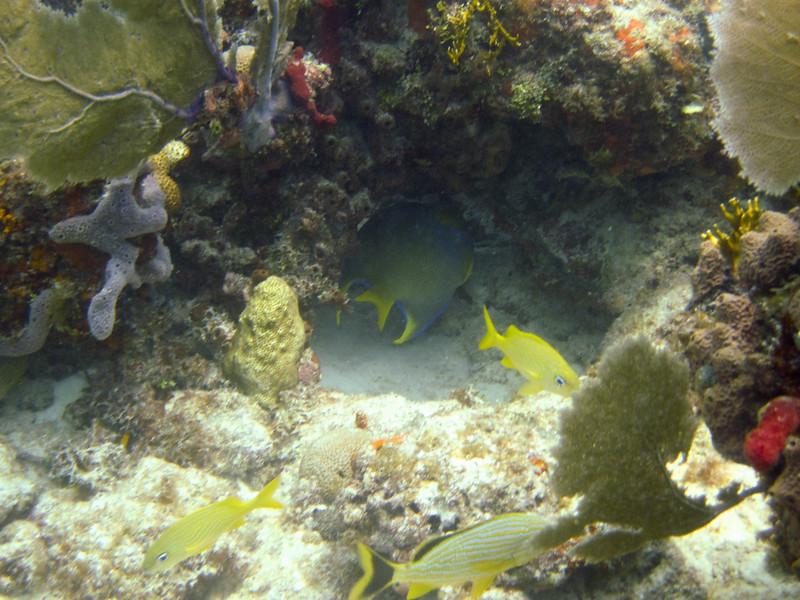 islamorada-diving-56.jpg