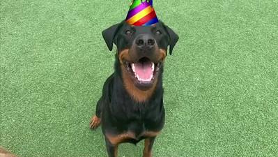 Ella Mae's 3rd Birthday!