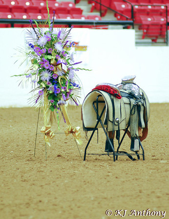 In Memory of Ravel - Pure Spanish Horse Champion