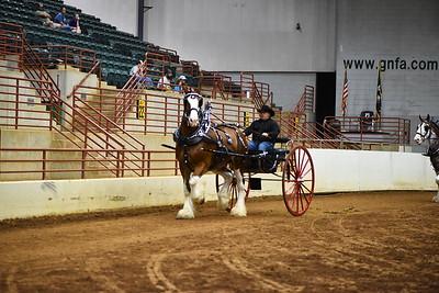 2020 Georgia National Draft Horse Show