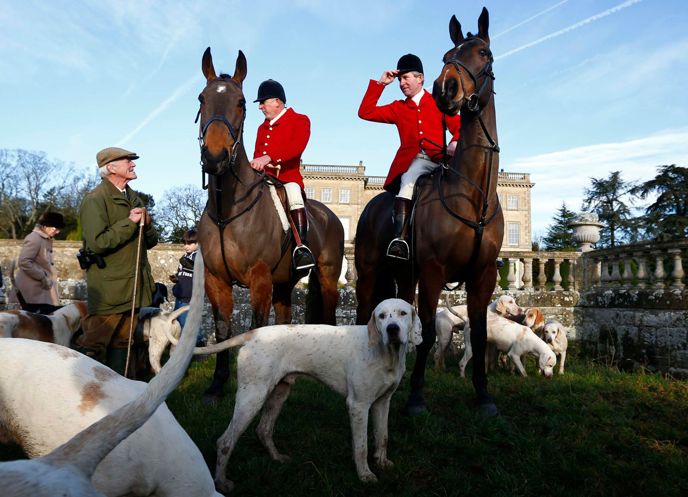 Description of . Members of the Quorn hunt await the start of the traditional Boxing Day meet at Prestwold Hall near Loughborough, central England, December 26, 2012. A ban imposed seven years ago states that foxes can be killed by a bird of prey or shot but not hunted by dogs. Hunts continue nowadays with pursuers accompanying dogs in chasing down a pre-laid scented trail.  REUTERS/Darren Staples